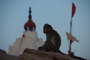Am Berg von Hanuman dem Affenkoenig herrscht nur einer - die Affen!!!