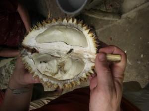 ...noch eine exotische Frucht, die Durian (Jackfruit). Extrem fetthaltig und schmeckt nach einer Mischung aus Zwiebel und Knoblauch. Die Einheimischen lieben sie, Touristen (wir eingeschlossen) weniger...