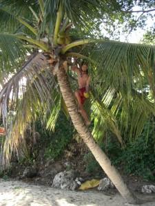Was sagt man dazu??? Die Kokosnüsse braucht man sich nur von den Palmen zu holen