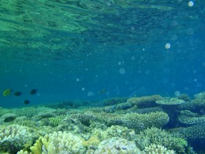 Die Riffe waren ganz flach und am schönsten eigentlich direkt unter der Wasseroberfläche - da waren die Farben am intensivsten